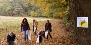 In search of chestnuts in the Palatinate